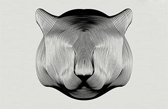 Captivating Patterns